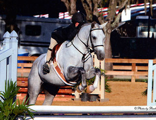 Providence Equestrian Riding Lessons